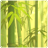 Bamboo Forest Donation