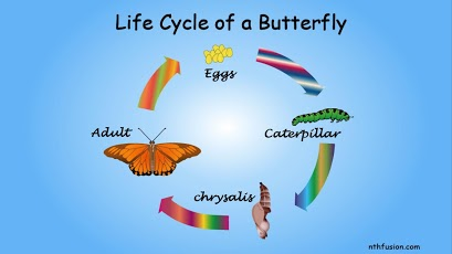 A Life Cycle App Android Education
